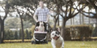 Best Pet Strollers for Dogs